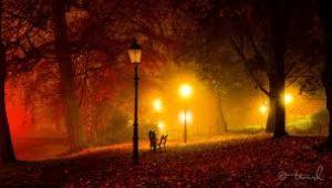 сонный парк